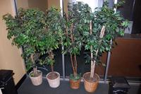 4 Artificial Trees
